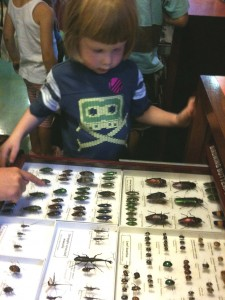 Natural history specimens on display