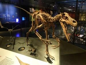 Natural History Musuem of Los Angeles