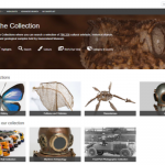 Queensland Museum - Browser